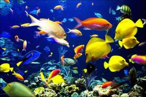 热带鱼品种及饲养要点